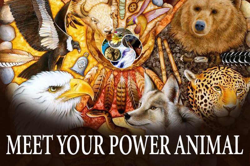MEET YOUR POWER ANIMAL AND SPRIT ALLIES WITH SHAMANISM 101
